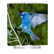 Indigo Bunting Alighting Shower Curtain