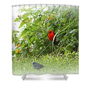 Indigo Bunting And Scarlet Tanager 2 Shower Curtain
