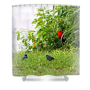 Indigo Bunting And Scarlet Tanager Shower Curtain