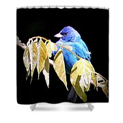 Indigo Bunting - Img 423-008 Shower Curtain