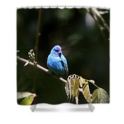 Indigo Bunting - Img-428-003 Shower Curtain