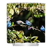 Indigo Bunting - Img 431-013 Shower Curtain