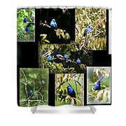 Indigos-collages 6-009 Shower Curtain