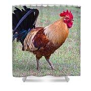 Infamous Kauai Chicken Shower Curtain