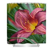 Inflamed - Lily Shower Curtain