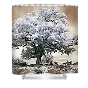 Infrared Tree On A Hill In Gettysburg Shower Curtain by Paul W Faust -  Impressions of Light