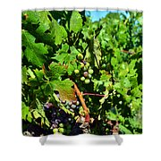 Inglenook Vineyard -10 Shower Curtain
