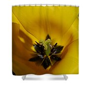 Inner Beauty Of A Tulip Shower Curtain