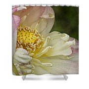 Inner Beauty Of The Lotus Shower Curtain