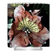 Inner Floral Beauty Shower Curtain