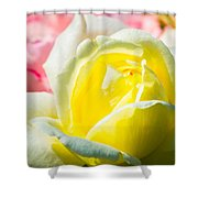 Inner Light Of Rose Shower Curtain