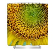 Inner Peace Forms Within This Sweet Yellow Sunflower Shower Curtain