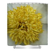 Inner Section Of A White Peony Shower Curtain