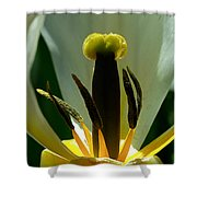 Inner Workings Shower Curtain by Rona Black