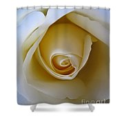 Innocence White Rose 5 Shower Curtain