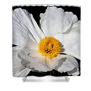 Innocent Krinkle - White Peony By Diana Sainz Shower Curtain