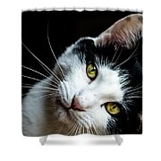 Inquisitive Kitty Shower Curtain