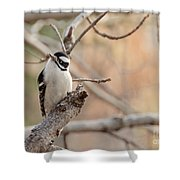 Inquisitive Woodpecker Shower Curtain