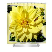 Insect On A Dahlia Shower Curtain