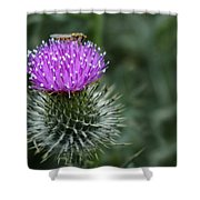 Insect On A Thistle Shower Curtain