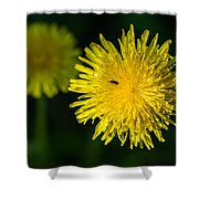 Insects On A Dandelion Flower - Featured 3 Shower Curtain