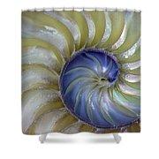 Inside A Nautilus Shell Shower Curtain