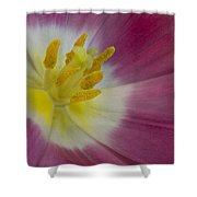 Inside A Pink Tulip Shower Curtain
