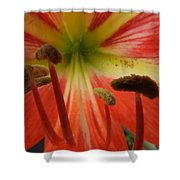 Inside Amaryllis Shower Curtain