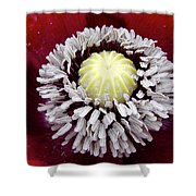 Inside Poppy Shower Curtain