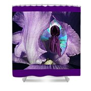 Inside The Iris Shower Curtain