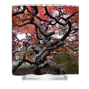 Inside The Japanese Maple Shower Curtain