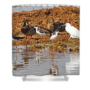 Inter-species Meeting Place Shower Curtain
