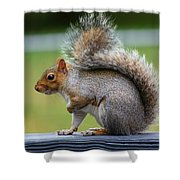 Interesting Tail Shower Curtain