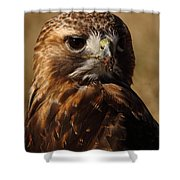 Red Tailed Hawk Portrait Shower Curtain