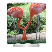 Intertwined Flamingoes Shower Curtain