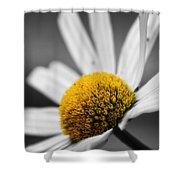 Intimate Daisy Shower Curtain