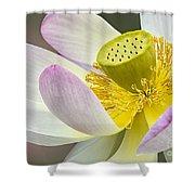 Intimate Sacred Lotus Bloom Shower Curtain