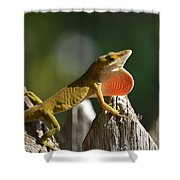 Intimidated Anole Shower Curtain