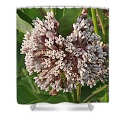 Into The Heart Of A Milkweed Flower Shower Curtain