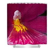 Into The Orchid Shower Curtain