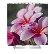 intoxicated by Love Shower Curtain