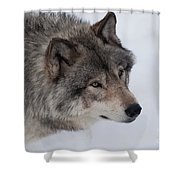 Intrigued Shower Curtain