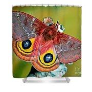 Io Moth Shower Curtain