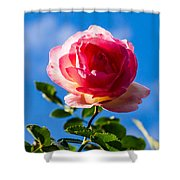 iPhone Case - Pink Rose Shower Curtain
