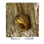 iPhone Squirrel In A Hole Shower Curtain