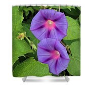 Ipomea Acuminata Morning Glory Shower Curtain