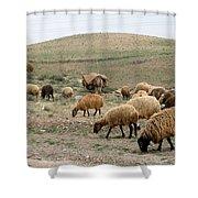Iran Sheep Shower Curtain