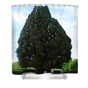 Iran Yazd Cedar Tree Shower Curtain