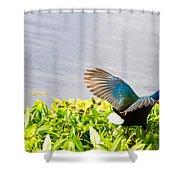 Iridescent Color Of Purple Gallinule Shower Curtain