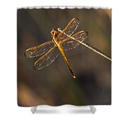 Iridescent Dragonfly Wings Shower Curtain